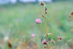 Nature et fleurs images stock