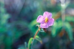 Nature et fleurs photographie stock