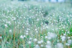 Nature et fleurs photographie stock libre de droits