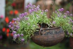 Nature et fleurs Photo stock