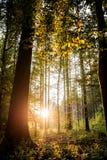 Nature et fond environnemental Photos stock