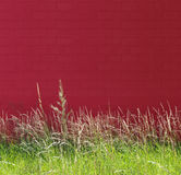 Nature et mur rouge Photo libre de droits