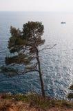 Nature et paysage marin Photo libre de droits