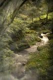 Nature et rivière à Mexico photo libre de droits