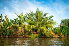 The nature of exotic Asia, rivers and trees, nature of asia royalty free stock photography