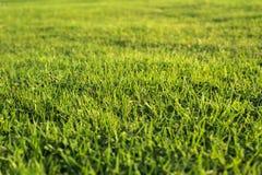 Nature extérieure d'herbe Photographie stock