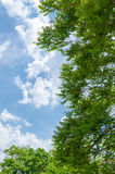 Nature in fair weather. An airy and dynamic picture of natural forms on the ground and in the sky Royalty Free Stock Photo
