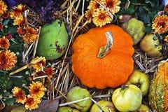 Nature on fall, pumpkins and dahlias Stock Photos