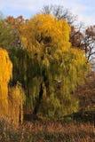Nature in fall season Stock Photo