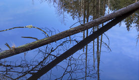 Nature Fallen Tree Reflection in Water Stock Photography