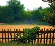 Nature Fantasy Background Royalty Free Stock Image
