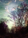 Nature Fantasy. Winter tree silhouettes with a colorful fantasy space sky Royalty Free Stock Photo