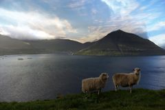 Nature in the Faroe Islands Royalty Free Stock Photos