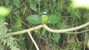Nature fauna ave barranquero. Video of nature fauna ave barranquero stock footage