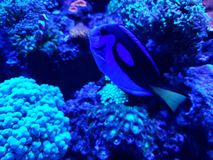 Marine life in a saltwater aquarium. Nature and fauna, underwater view, sea and ocean ecosystem stock images