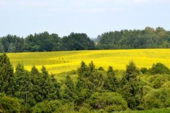 Nature field forest. Summer nature sky lush plain Stock Image