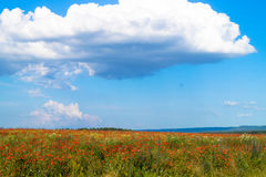 Nature field poppies. White clouds over the field Royalty Free Stock Photography