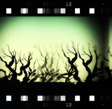 Nature film roll background Stock Photography