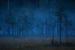 Nature of Finland. Wild nature of Finland. Scandinavia. Autumn nature of fern wilderness. Karelia royalty free stock image