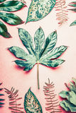 Nature flat lay with tropical plants and leaves on pastel pink background. Top view royalty free stock image
