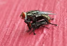 A nature of flies. Flies that are acting in accordance with his instincts Royalty Free Stock Image