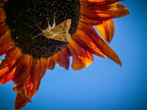 Nature, flora, fauna, sunflower, butterfly stock photo