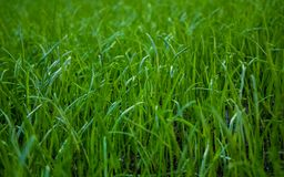 Nature, flora, garden, grass, lawn, earth royalty free stock images