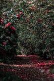 Nature, Flora, Leaf, Vegetation royalty free stock photos