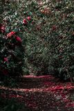 Nature, Flora, Leaf, Vegetation stock photos