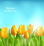 Nature Floral Background with Tulips Flowers Stock Photos