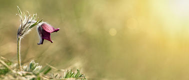 Nature flower banner Royalty Free Stock Photos