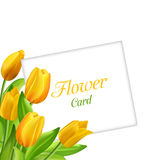 Nature Flower Card with Tulips, Invitation for Womens Day Royalty Free Stock Images