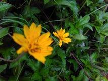 Nature. Flower Flora natural garden close-up Stock Photos