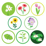 Nature flower icon set. Vector set of nature icons - plants & flowers Royalty Free Stock Photo
