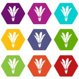 Nature flower icons set 9 vector. Nature flower icons 9 set coloful isolated on white for web Stock Images