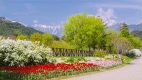 Nature, Flower, Vegetation, Botanical Garden Stock Image