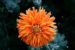 Nature-Flowers-0001 Fotografia Stock Libera da Diritti