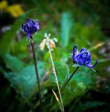 Flowers in morning time isolation. Nature flowers morning with water drop Stock Images