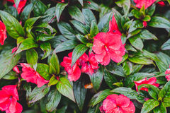 Nature flowers with water drop and leaves. Red flower pattern Stock Photography