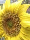 Flows. Nature, flows, macro, yellow, beautiful stock photography