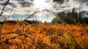 Nature. Focused shot stock images