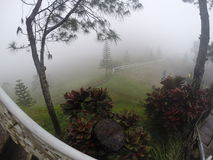 Nature Fog. Fish eye captions of a nature perfect for any projects Royalty Free Stock Photography