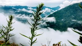 Nature. Foggy mountains with mother nature's Royalty Free Stock Image
