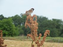 Sparrow sitting in tree branch stock images
