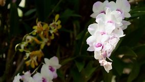 White Orchid Tilt down from tree Top stock video