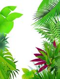 Nature forest background Stock Image