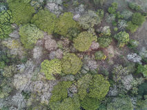 Nature forest background aerial view Stock Images