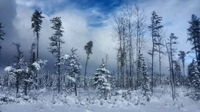 Winter Road Snow fir, Thunder Bay Canada Stock Images