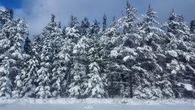 Winter Road Snow fir, Thunder Bay Canada Stock Photography