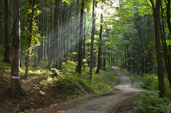 Nature forest daylight royalty free stock images